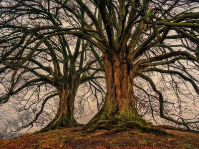 Rules for living: Lessons from the tree